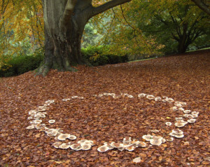 fairy+ring+fungal